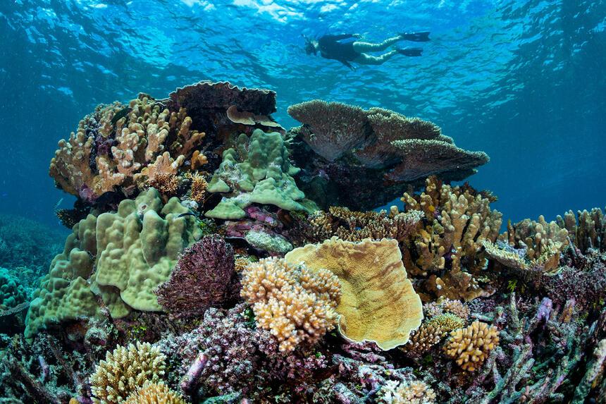 Attractions near Heron Island Resort in Queensland, Australia