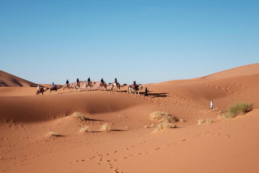 Camel caravan in the desert in Sealine Beach Resort