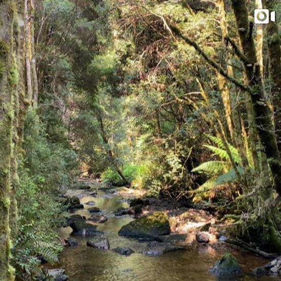 Natural landscape at Tasmanian Wilderness near Strahan Village
