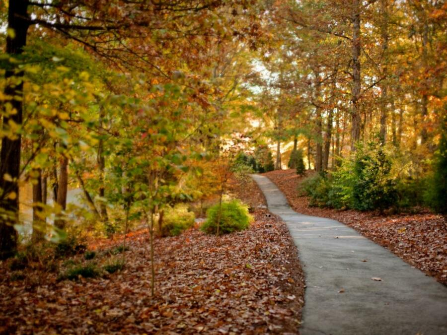 path through forest with colorful fall leaves