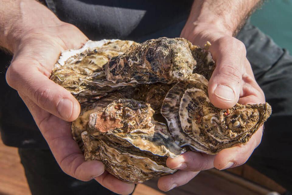 tour ostriche porto venere la spezia