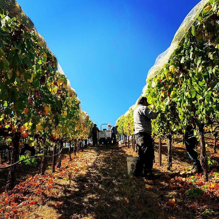 Windy Oaks Winery near Pine Inn