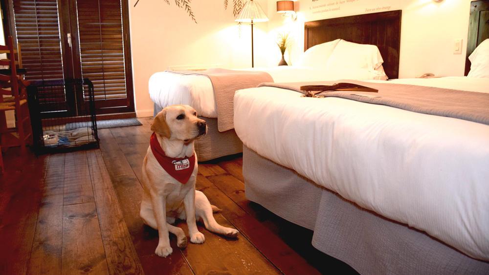 Canine room at Alberge Lac du Taureau in Lac Taureau
