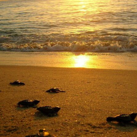 Turtles in the coast of Cabo