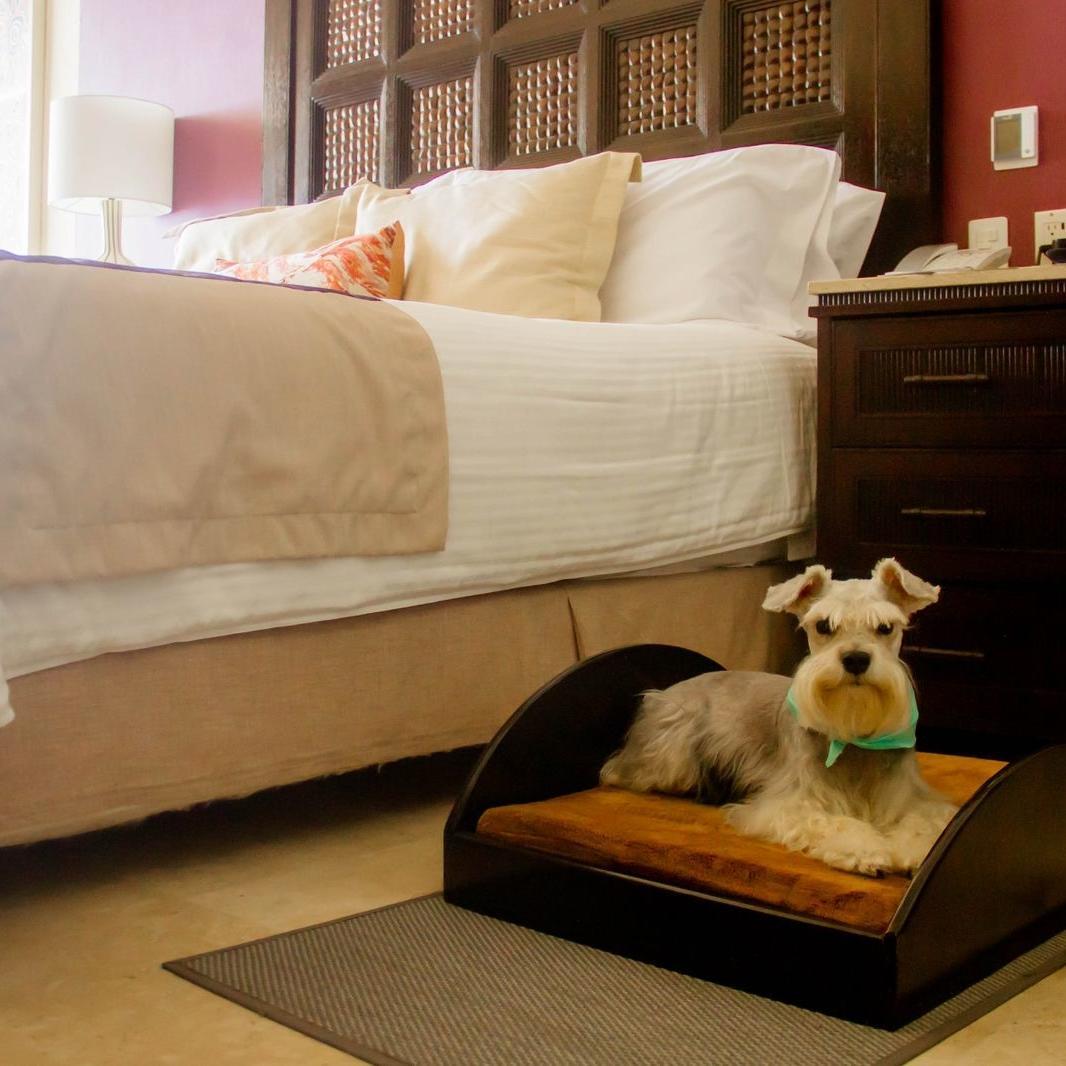 Hotel que admite mascotas