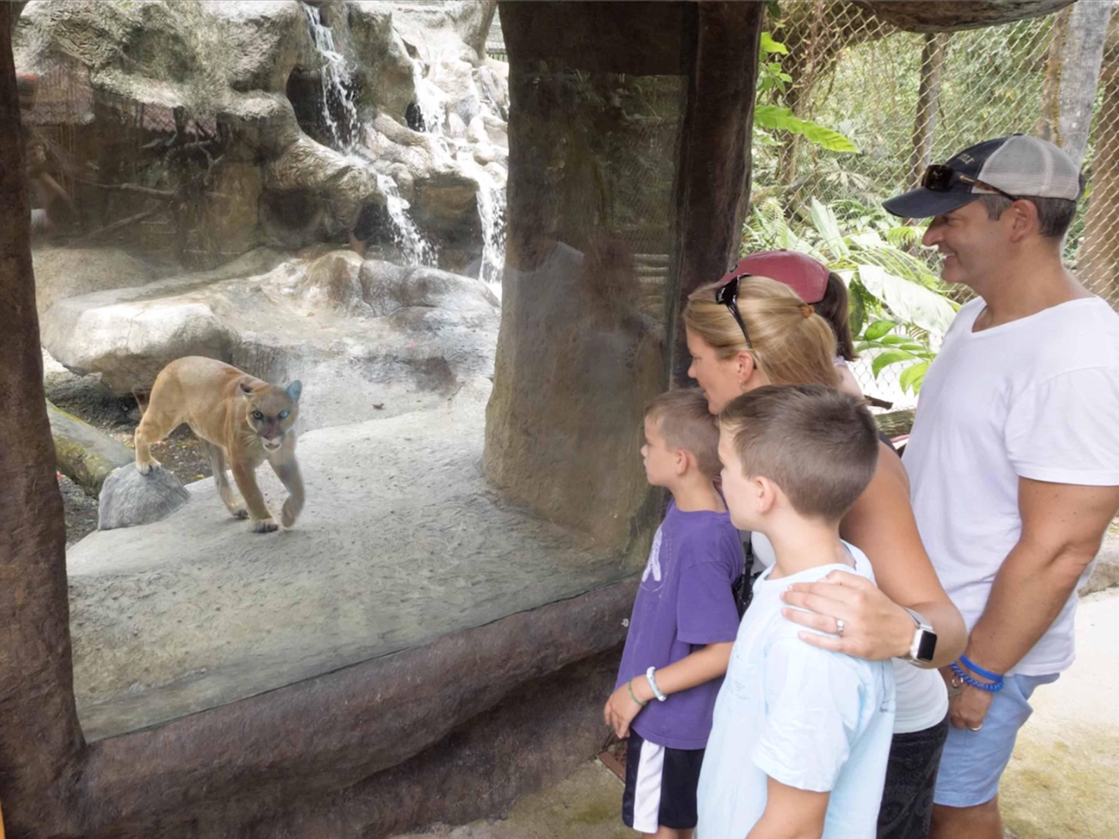 family looking at puma inside its habitat