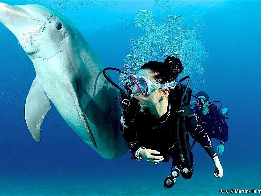 woman scuba diving with dolphin