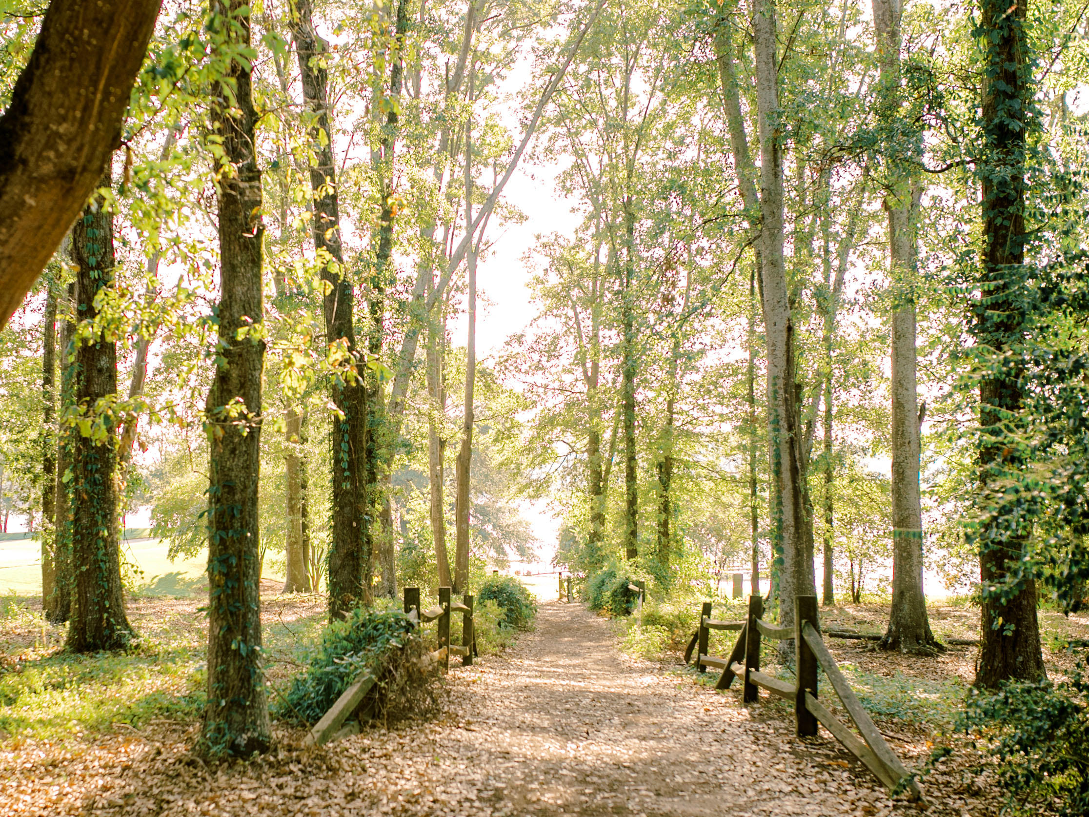 Trail with trees