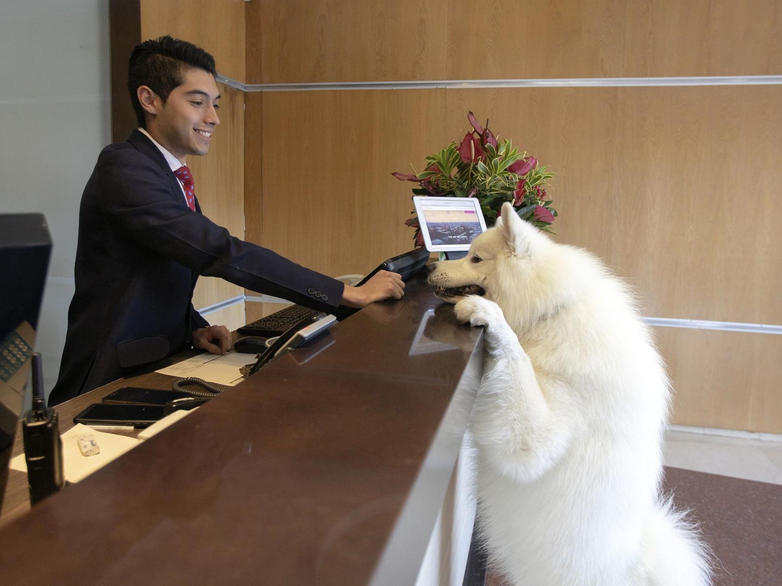 Dog Checking In