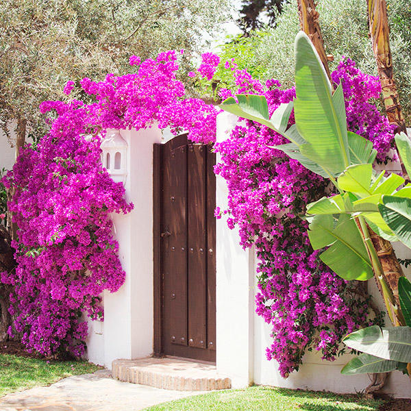Exterior garden view with flowers at Marbella Club