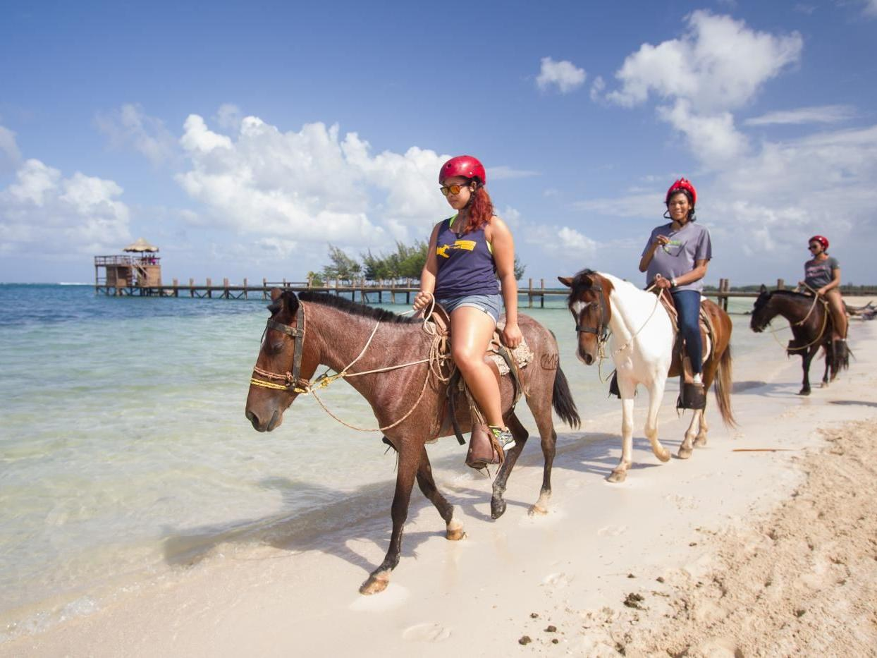 group of people riding horses near beach line