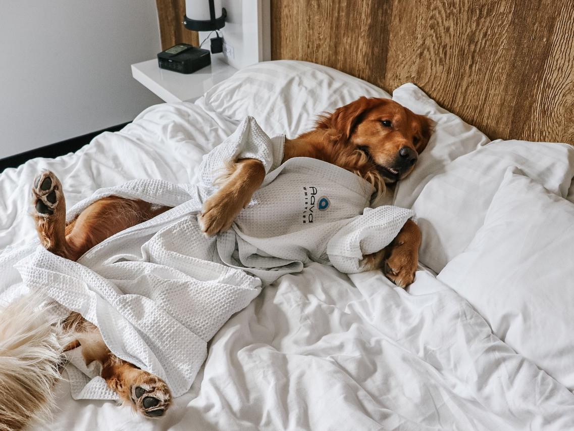 Dog Friendly dog sleeping on bed