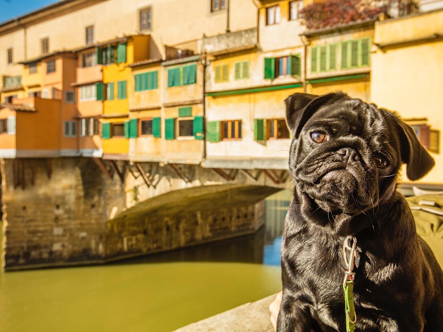 A puppy near the lake at Grand Hotel Minerva