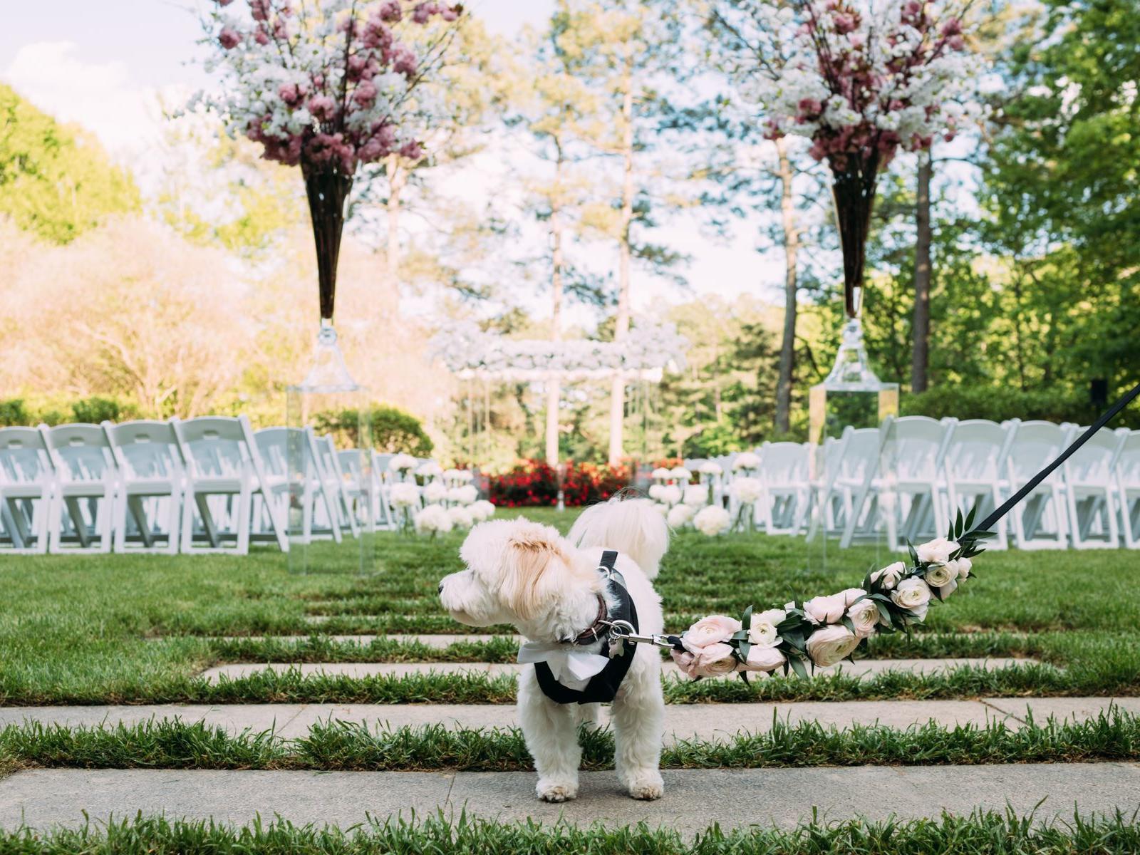 Dog on Wedding Lawn - Ginny Corbett