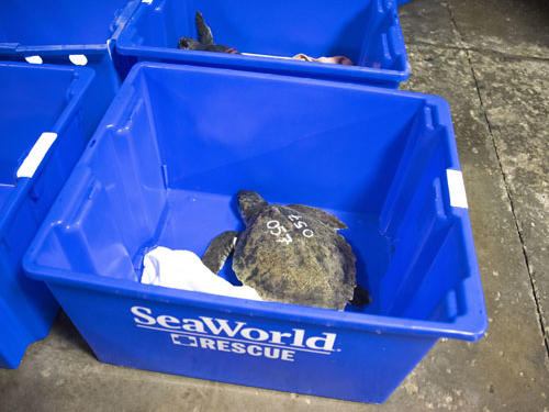 SeaWorld Orlando Continues its Mission to Save Endangered Species