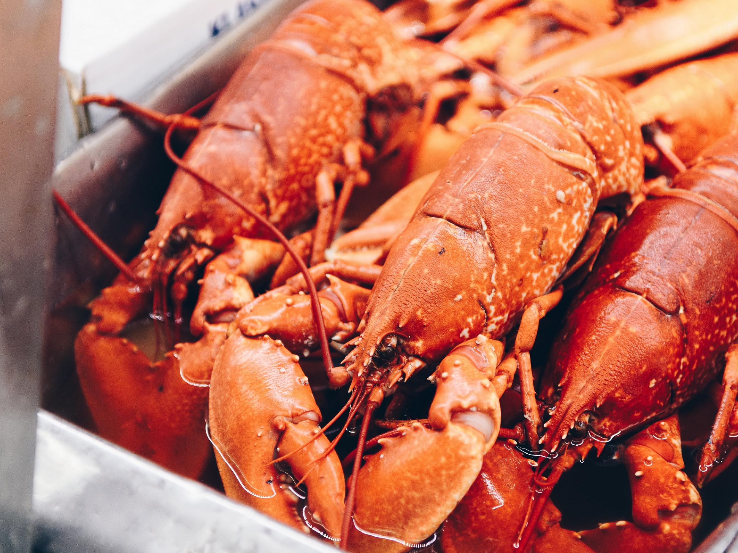 Lobster & Crab Feast WBC