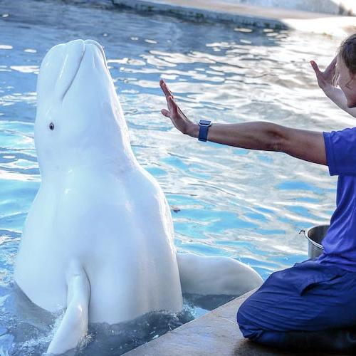 a trainer interacting with a whale at SeaWorld