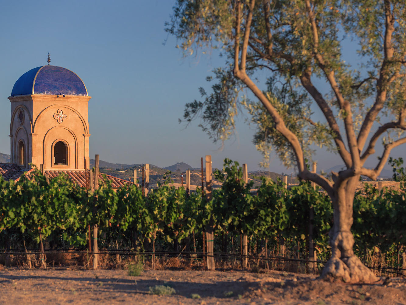 Vineyard with small chapel in the backrground