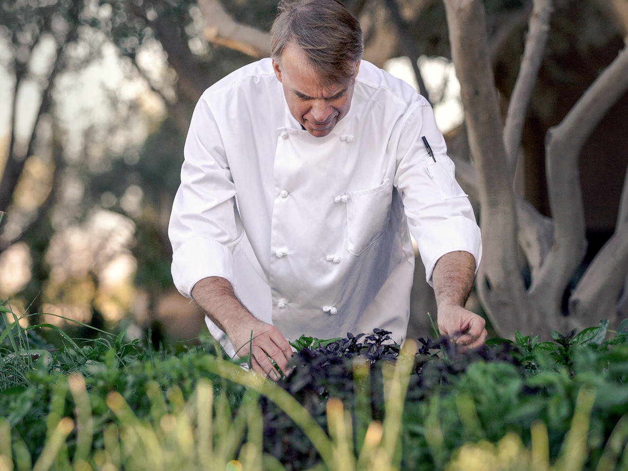 Chef looking at herbs in garden
