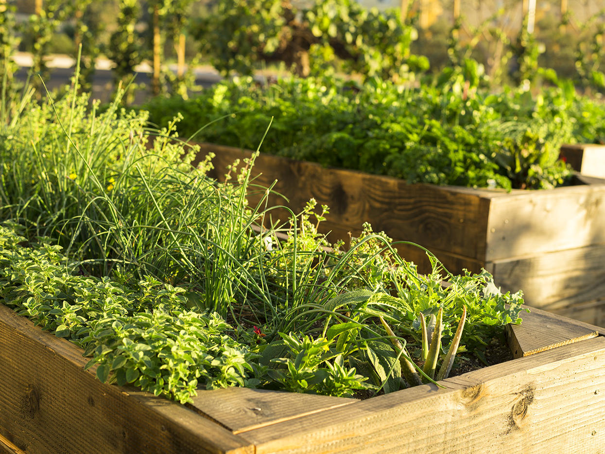 Planters with herbs