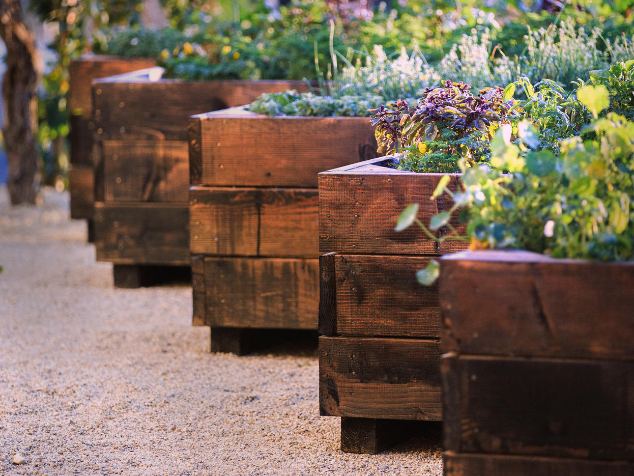 Herb garden in wooden planters