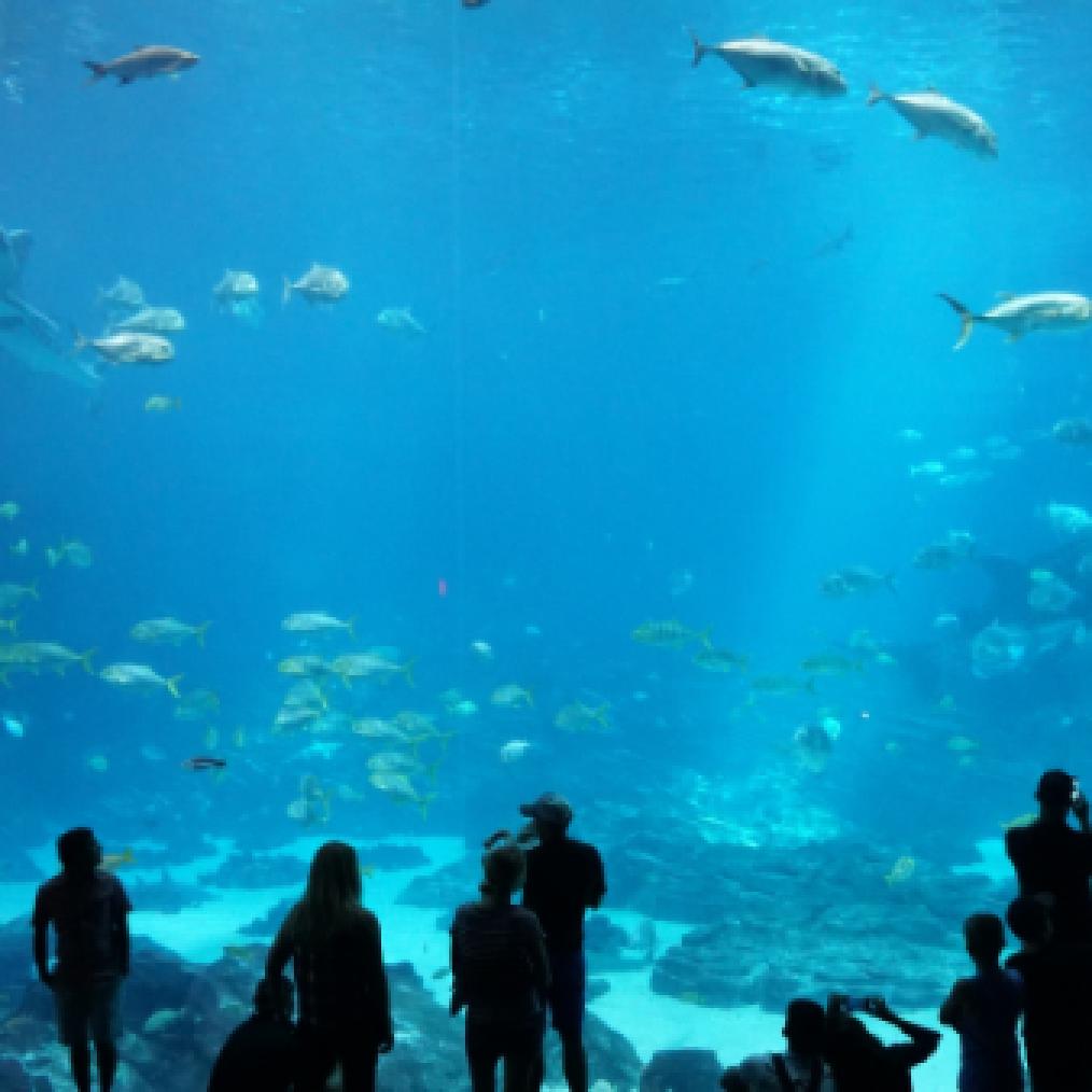 People at an Aquarium near St. James Hotel