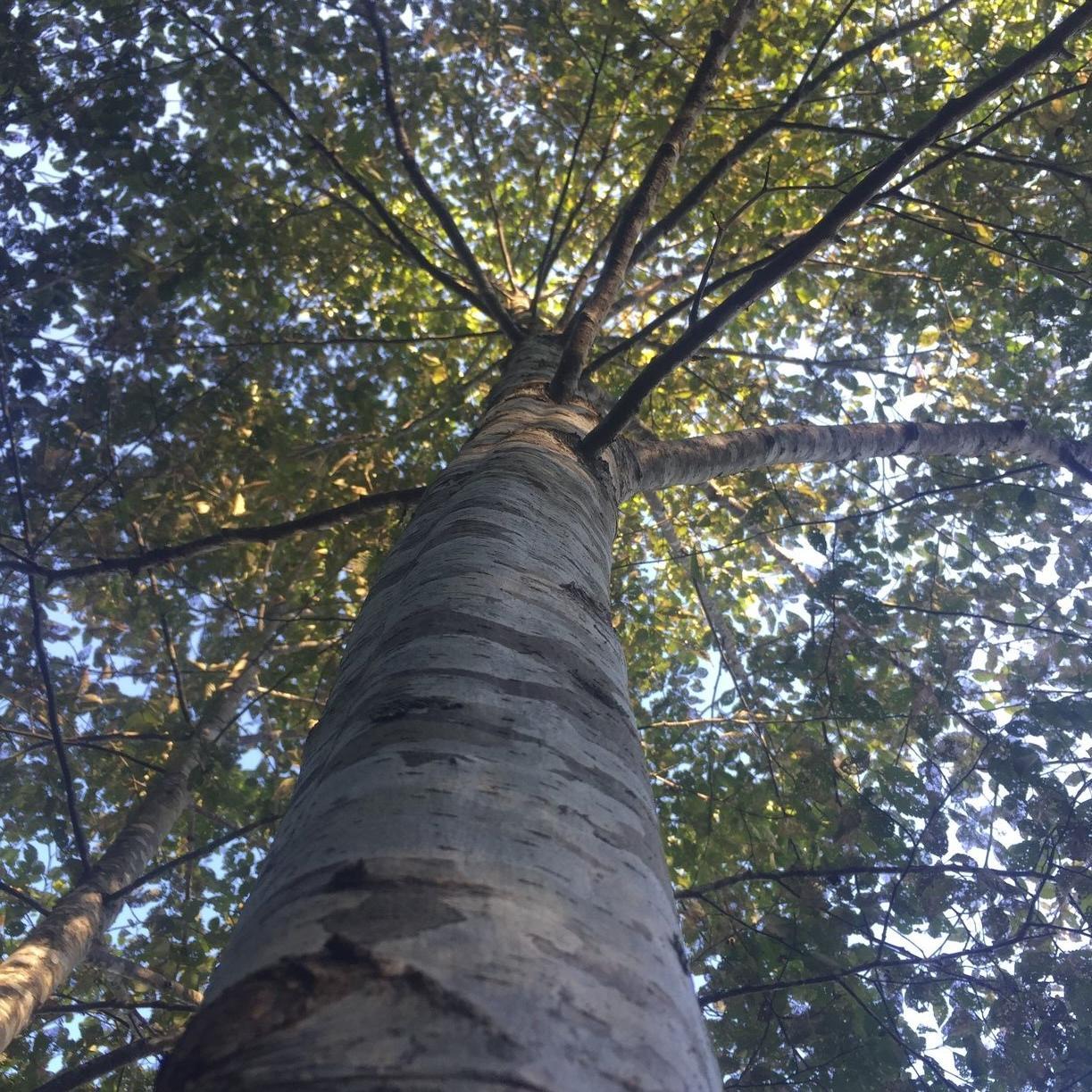 Image of woods at Alderbrook Woods
