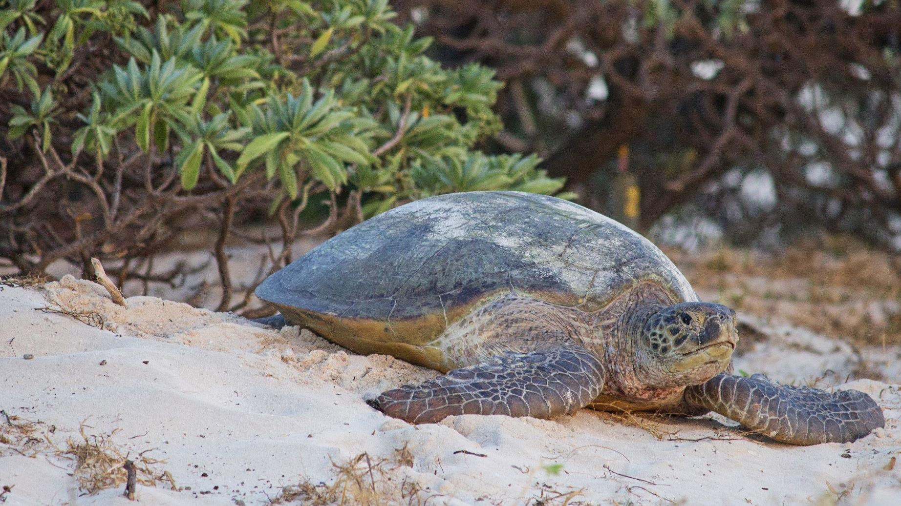 Turtle Season has Begun!
