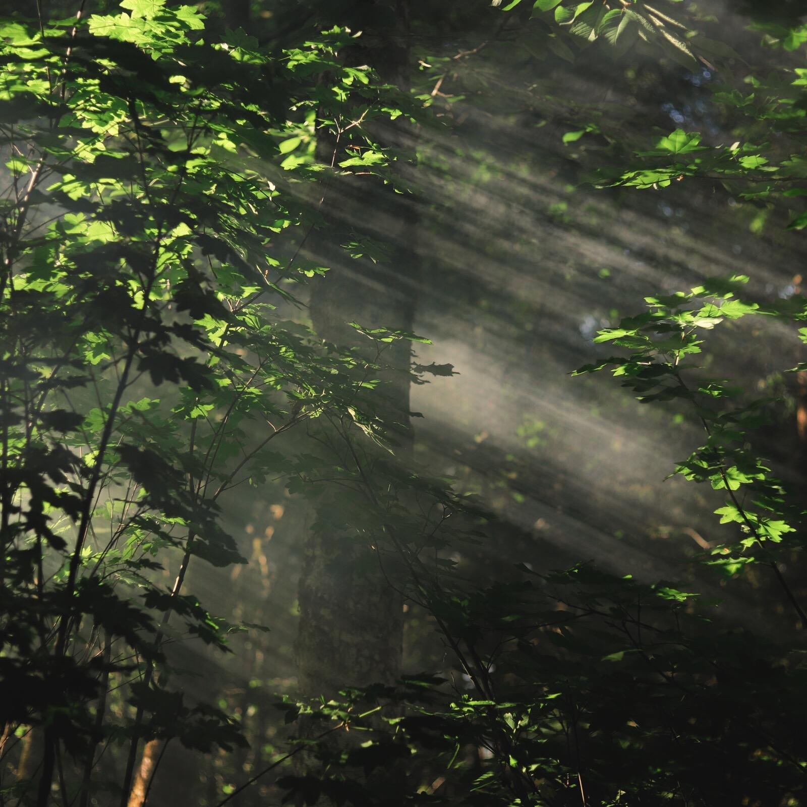 Image of the Rainforest at the Alderbrook Resort & Spa