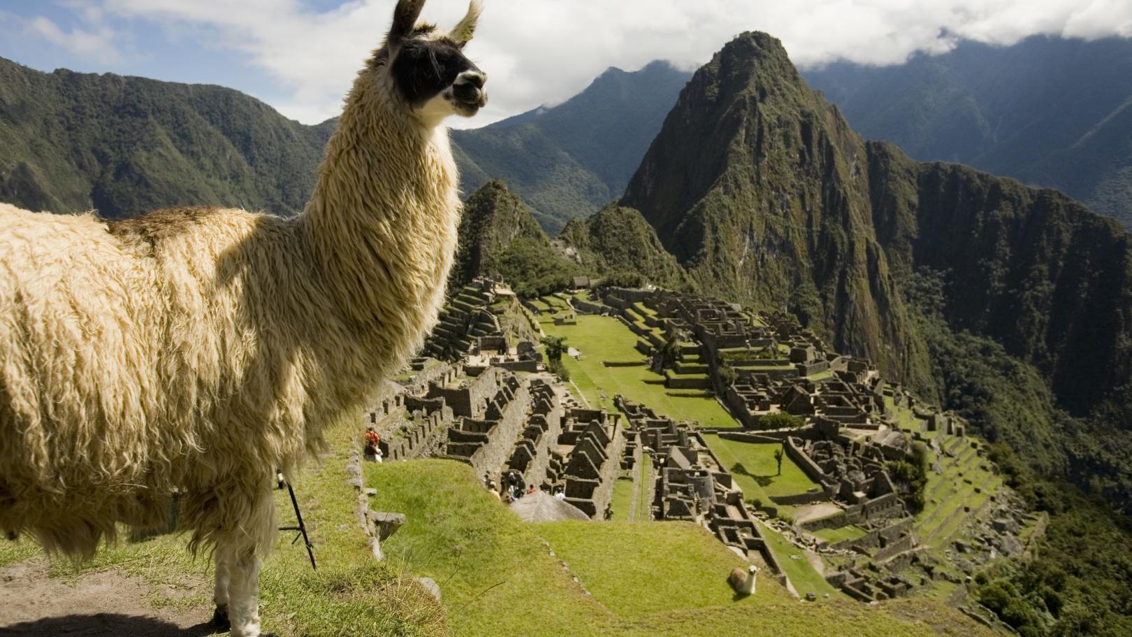 Photo of Machu Picchu with a Llama