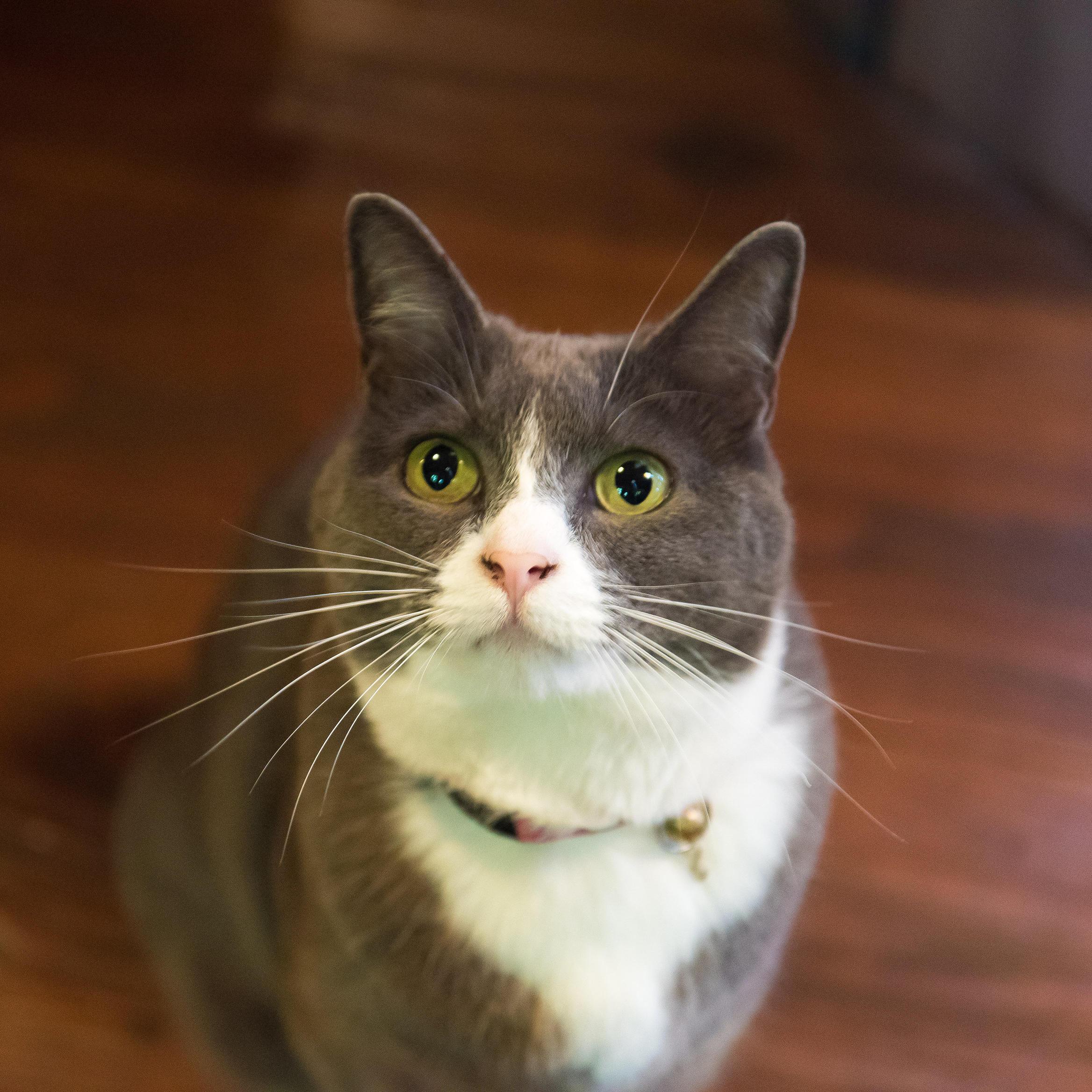 An Image of a cat at Pets program in Alderbrook Resort