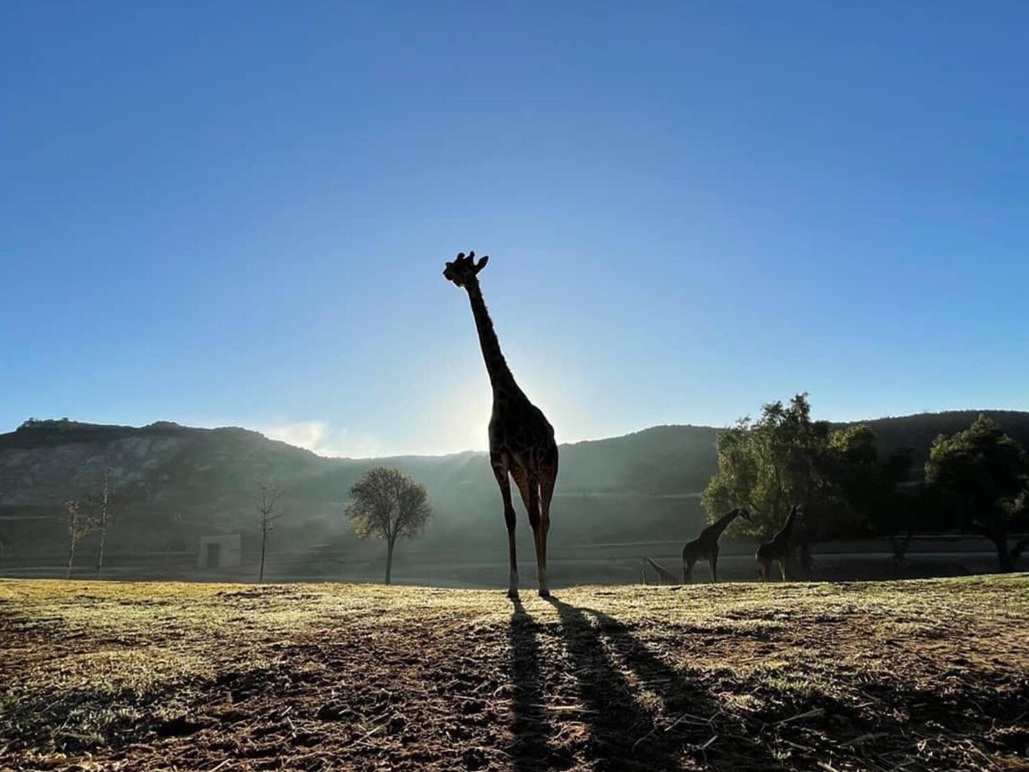 San Diego Attractions | San Diego Zoo & Safari Park Now Open