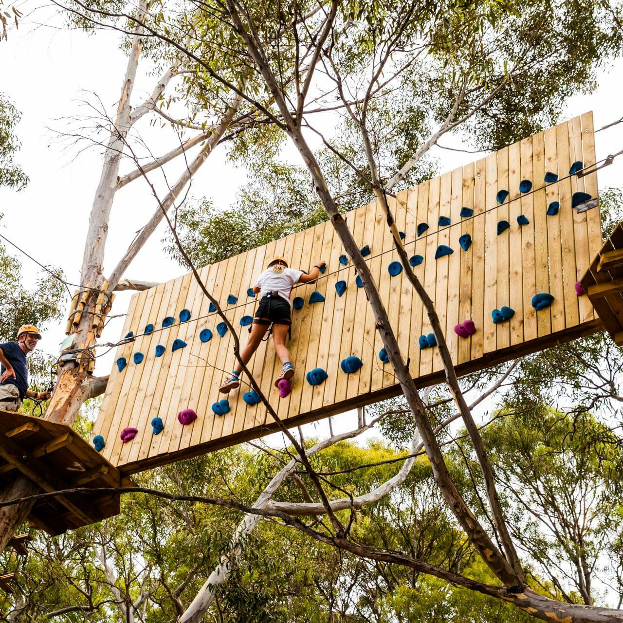 Man engaging in tree climbing activity at Adelaide City Park