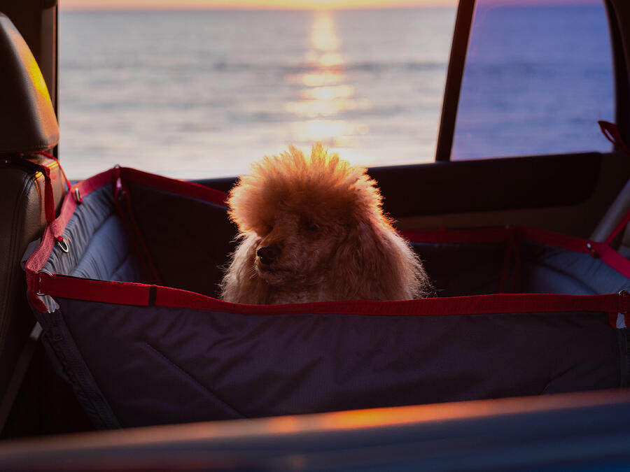 5 things you should know when travelling with a pet
