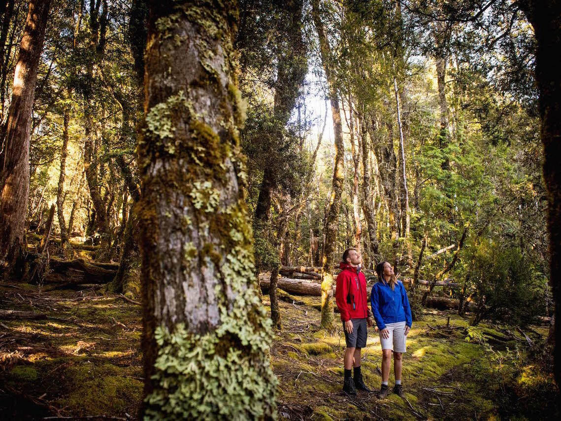 Couple walking on the woods trails at Cradle Mountain Hotel
