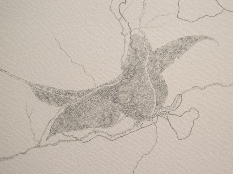 pencil art of a Flower at Cradle Mountain Wilderness Gallery