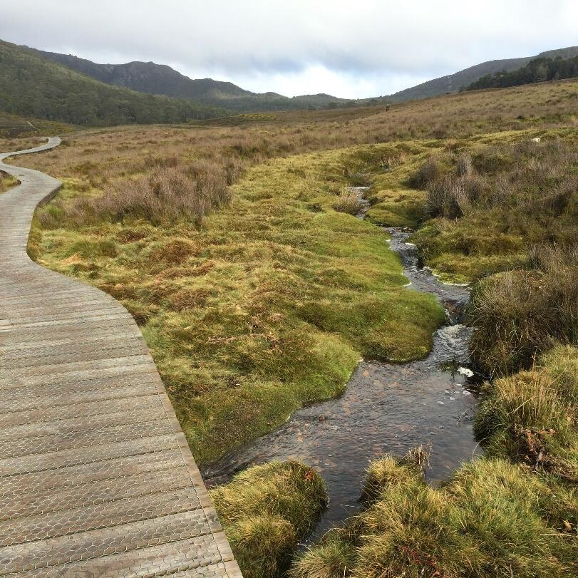 Trail at Ronny Creek area near Cradle Mountain Hotel