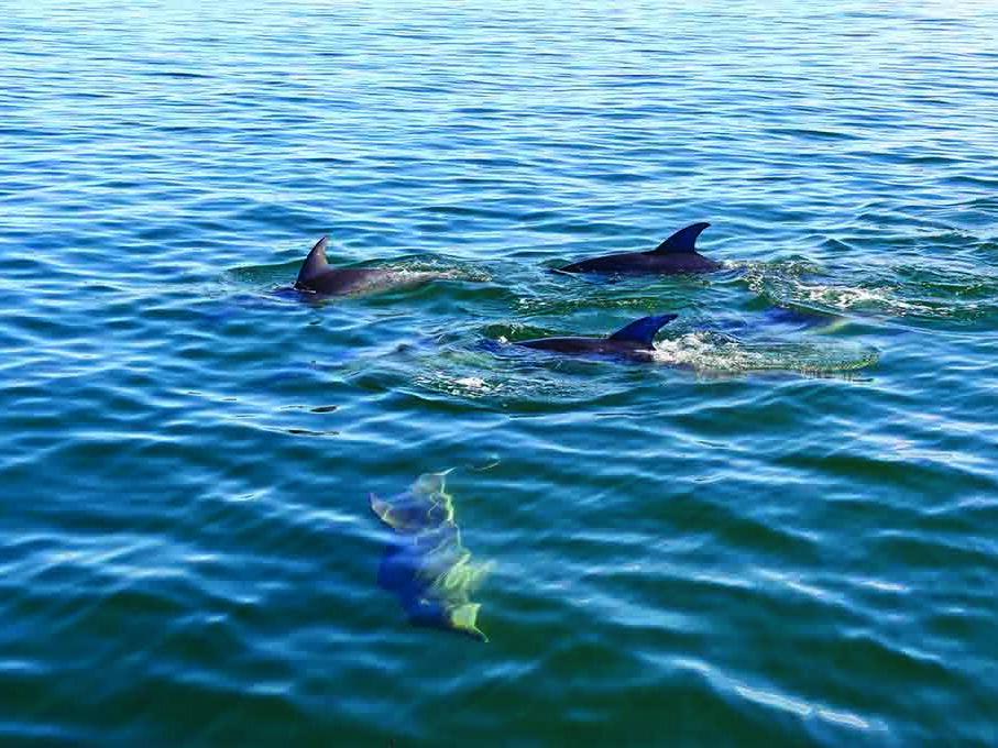 Dolphins near the sea at Freycinet Lodge