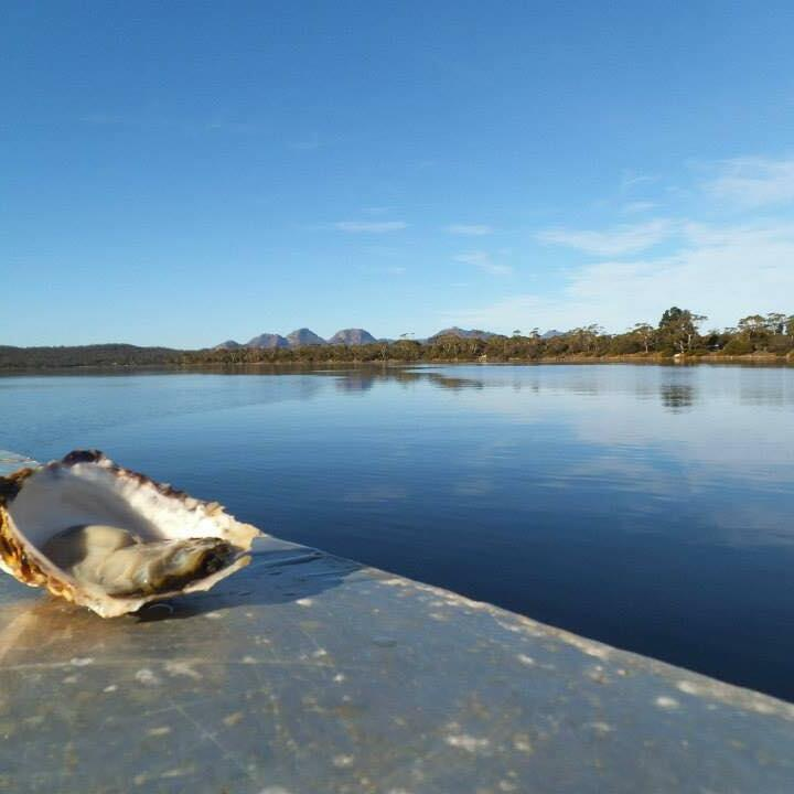 Oyster shell at the shaw near Freycinet Lodge
