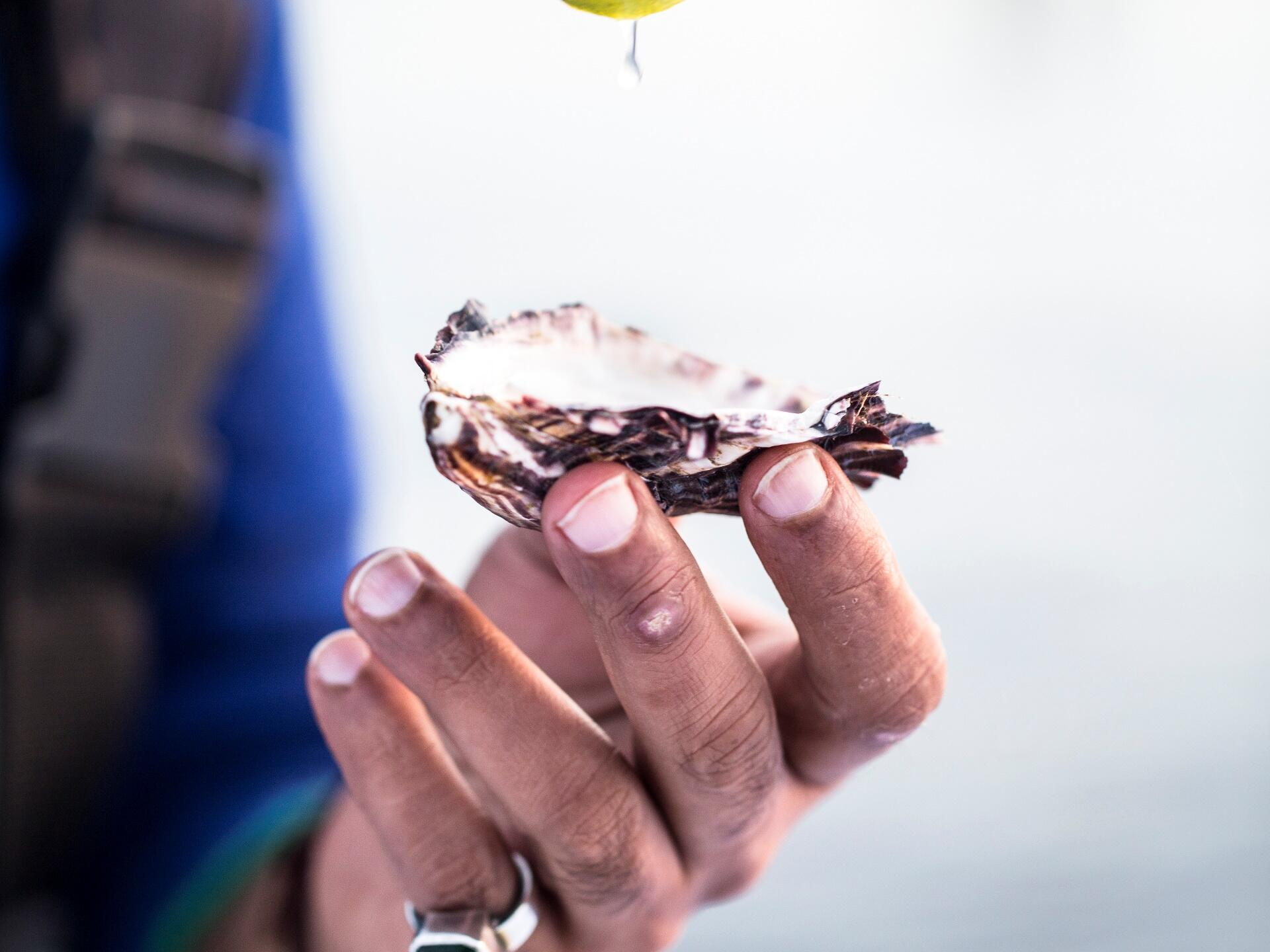 Oyster kept on a hand at the bay near the Freycinet Lodge