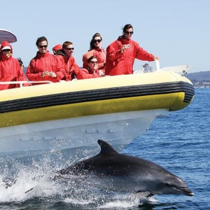 Dolphins at the ocean near Gordon River Cruises
