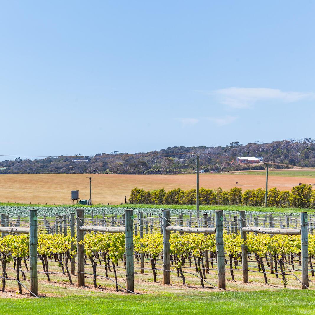 Vineyard near the Gordon River Cruises