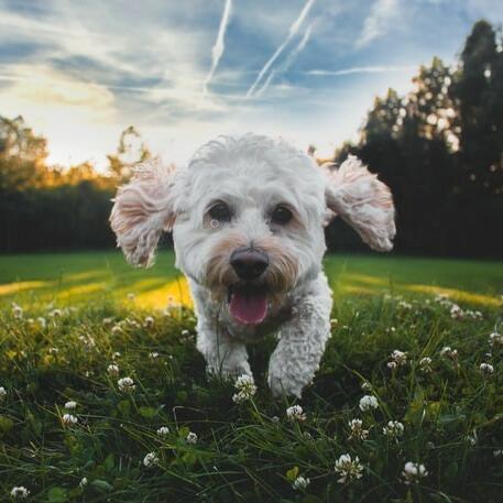 A puppy running through a green field