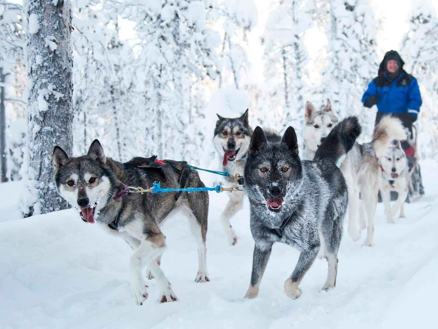 Husky activities at Northern Lights Village Hotels