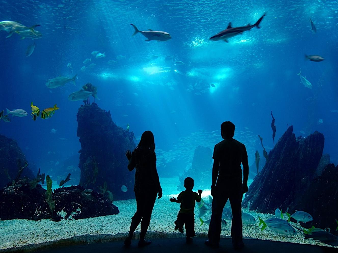 A mother, father, and son staring into an aquarium tank