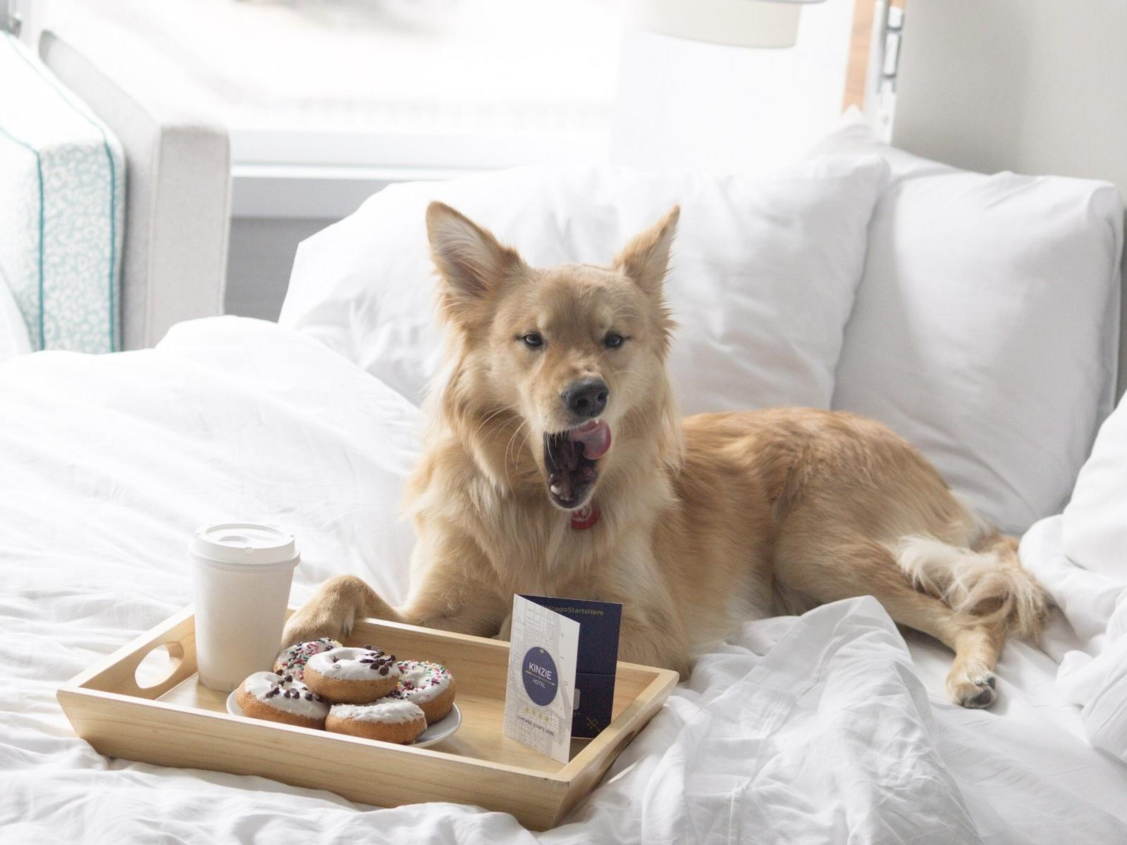 dog licking chops in bed with treat