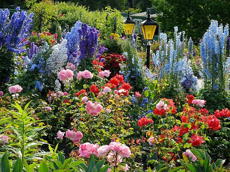 Flowers at Butchart Gardens.