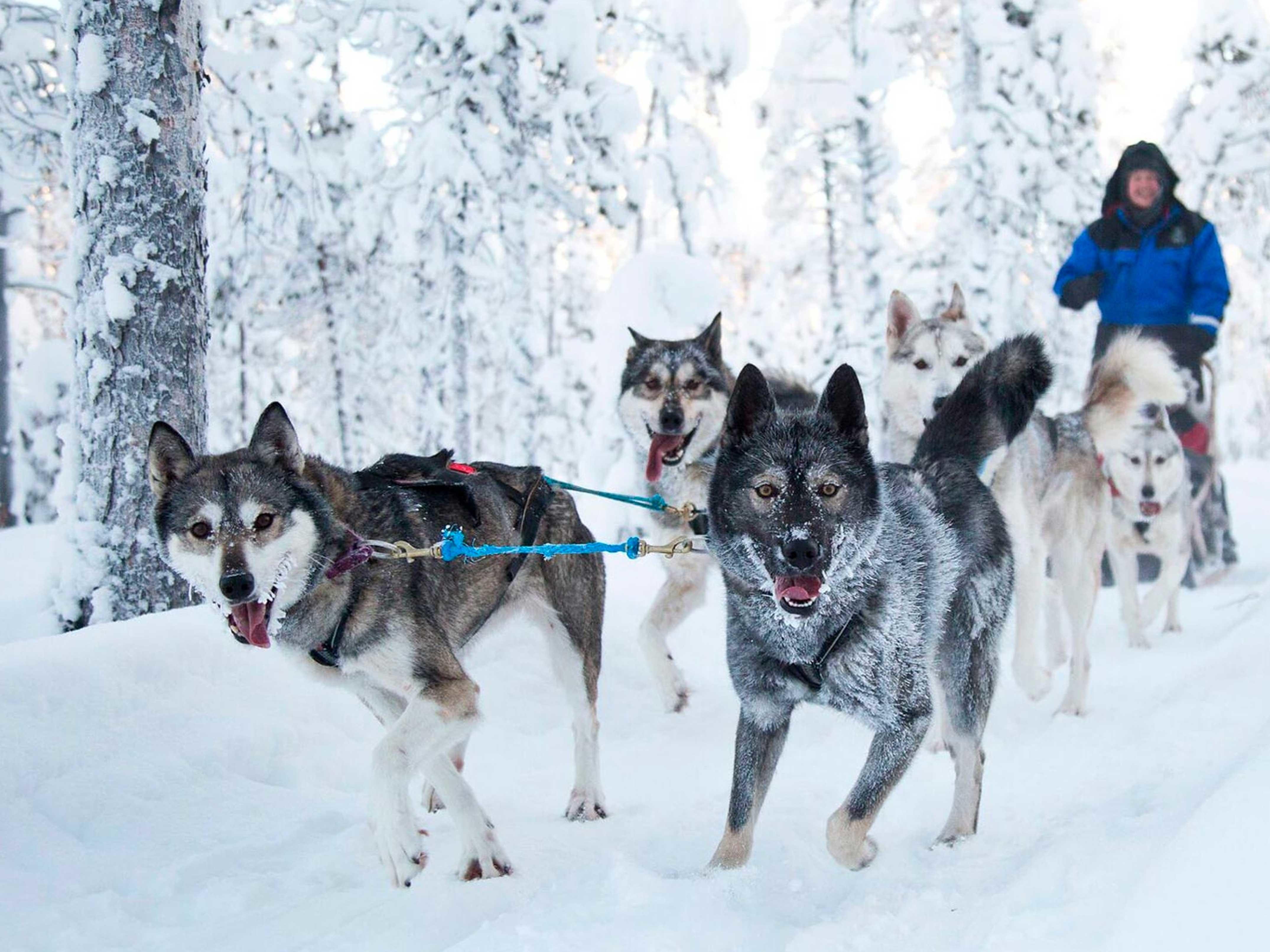 Husky activities at Northern Lights Village Hotels in Finland