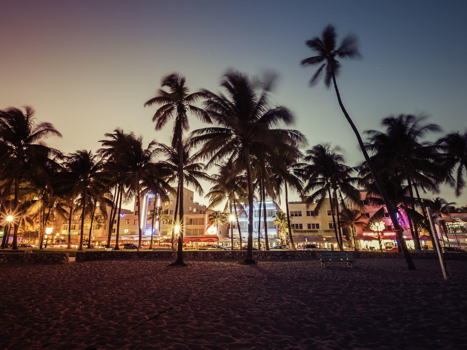 palm trees on south beach at sunrise