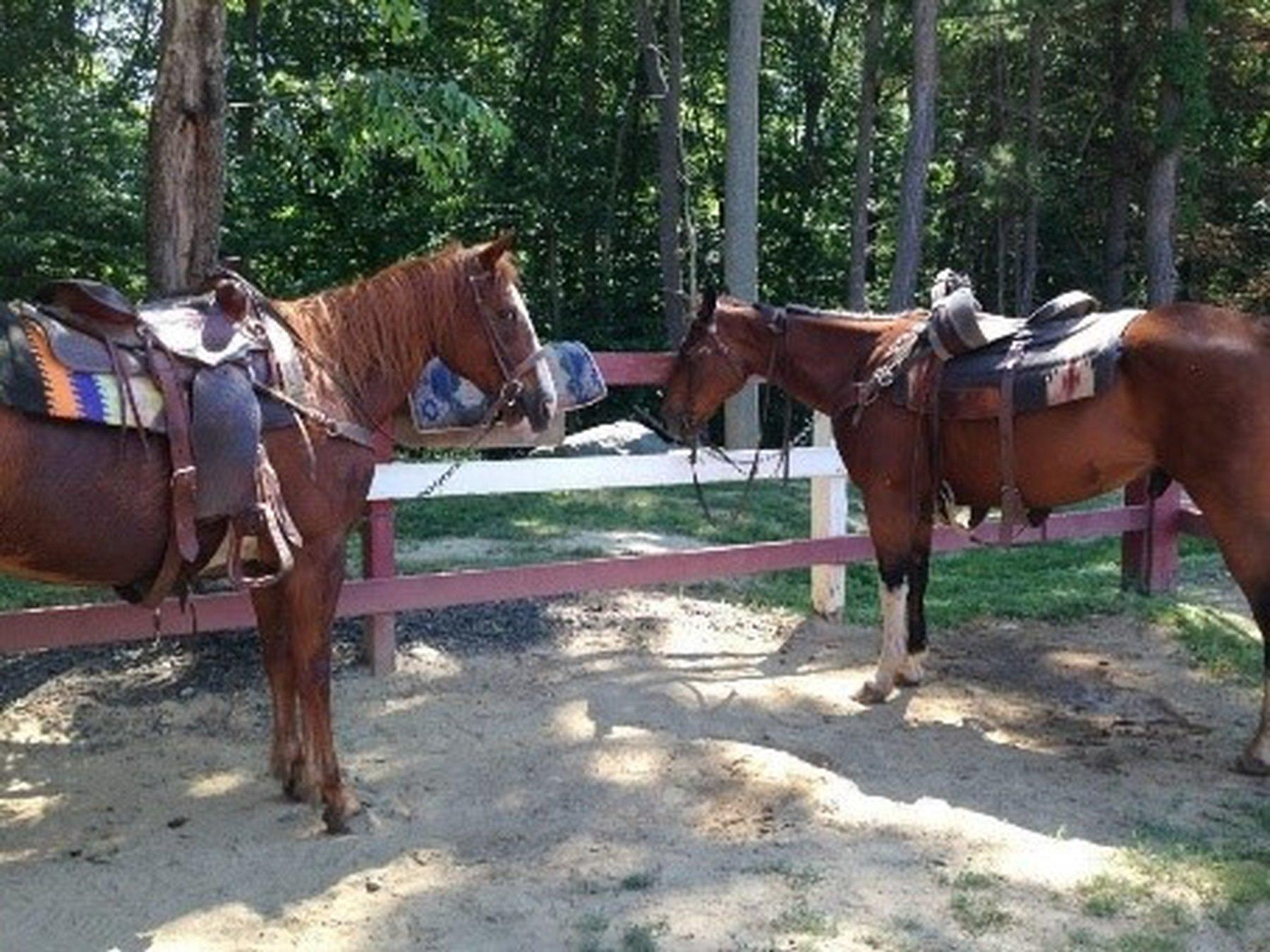 Westchester Trail Ride Package (Year Round)